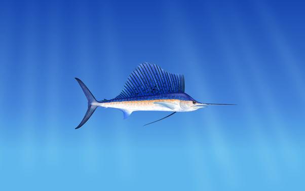 The Marlin Protocol